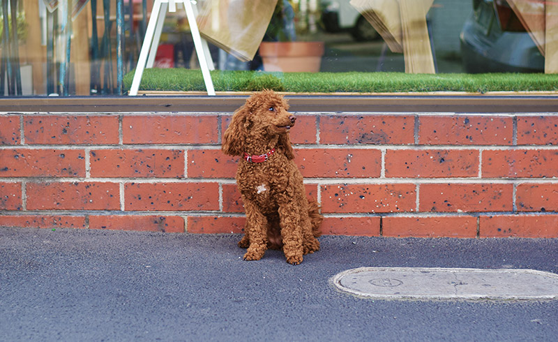 Doggo Friendly Places in Chapel Precinct